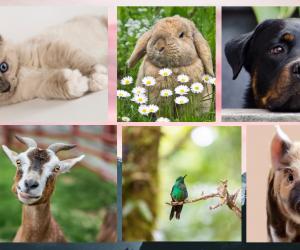 A Verdadeira Lei de Proteção aos Animais