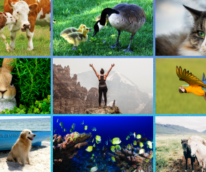Dia 04 de Outubro: Dia Internacional dos Animais